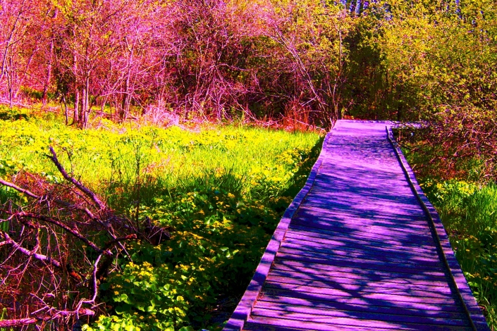The Marsh Walk in Bloom